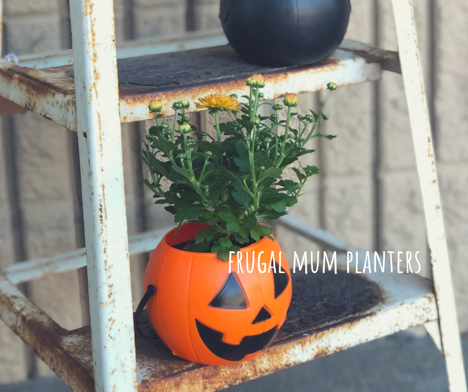 using a mini Halloween jack-o-lantern candy bucket to plant small mums for front porch decor.